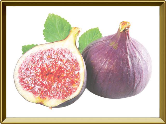 Смоковница — растение, фото в рамке №1