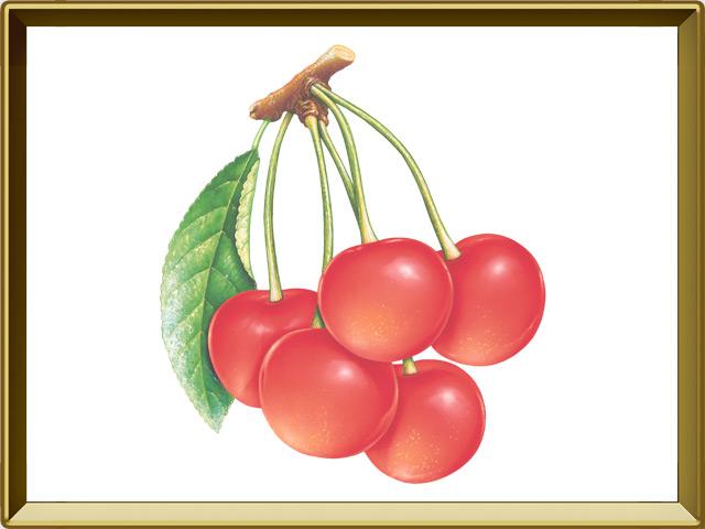Вишня — растение, фото в рамке №1