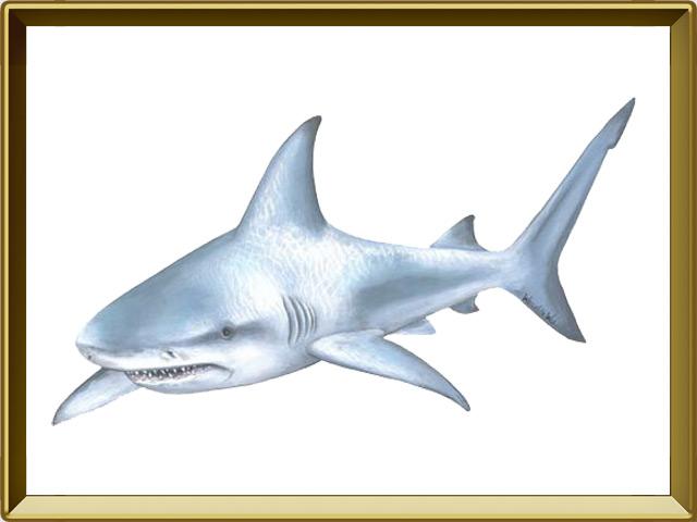 Акула — рыба, фото в рамке №1