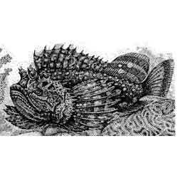 Бородавчатка — рыба, картинка чёрно-белая