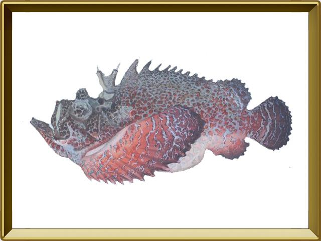 Бородавчатка — рыба, фото в рамке №1