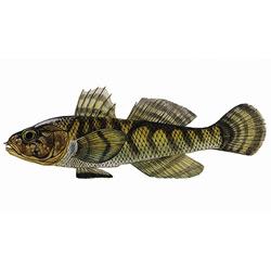 Бычок-цуцик — рыба, картинка цветная