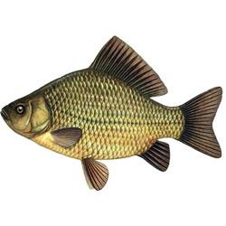 Карась золотой — рыба, картинка цветная