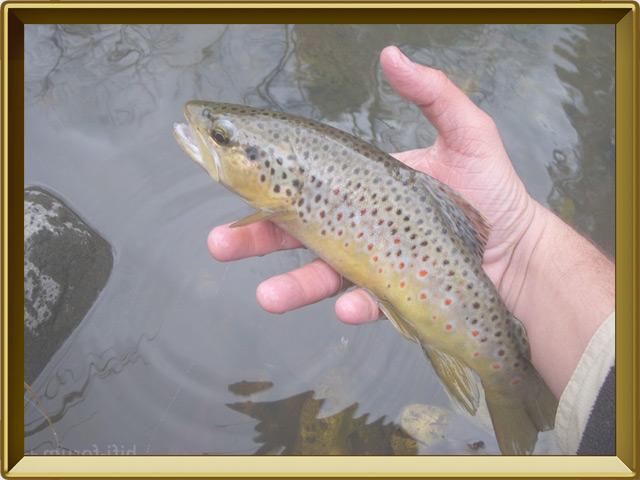 Кумжа — рыба, фото в рамке №3