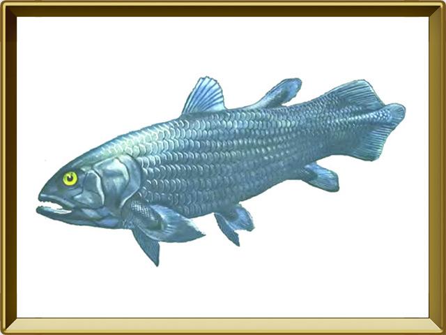 Латимерия — рыба, фото в рамке №1