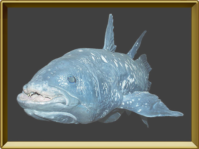 Латимерия — рыба, фото в рамке №3