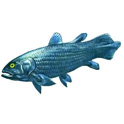 Латимерия — рыба, картинка цветная