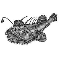 Морской чёрт — рыба, картинка чёрно-белая