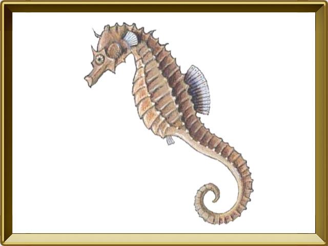 Морской конёк — рыба, фото в рамке №1
