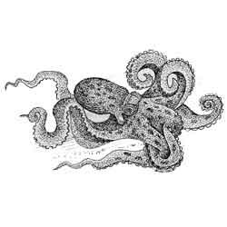 Осьминог — рыба, картинка чёрно-белая