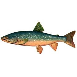 Палия — рыба, картинка цветная