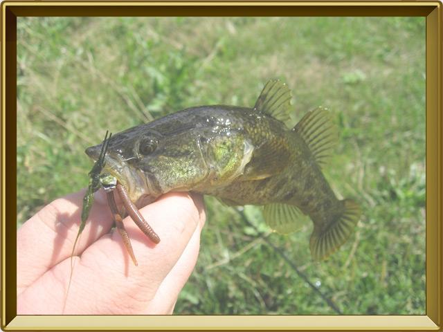 Ротан — рыба, фото в рамке №3