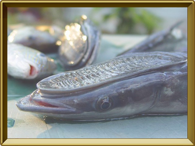 как сделать чтобы рыба клевала