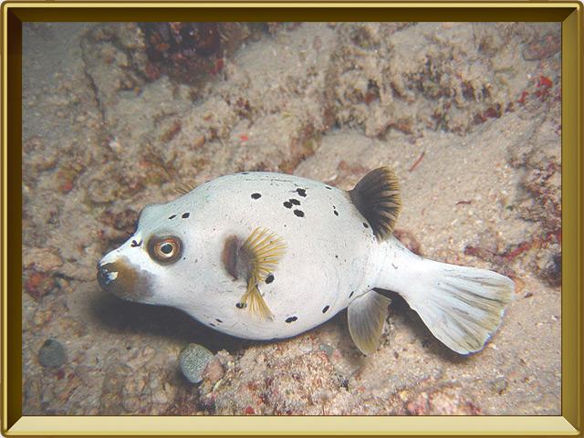 Рыба-собака — рыба, фото в рамке №2