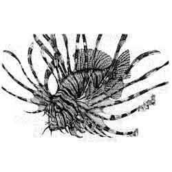 Рыба-зебра — рыба, картинка чёрно-белая