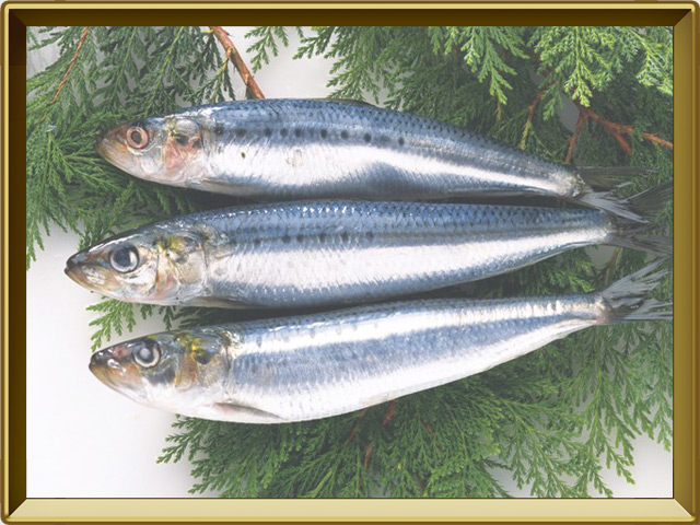 Сельдь — рыба, фото в рамке №3