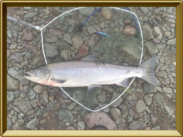 Сёмга — рыба, фото в рамке №3