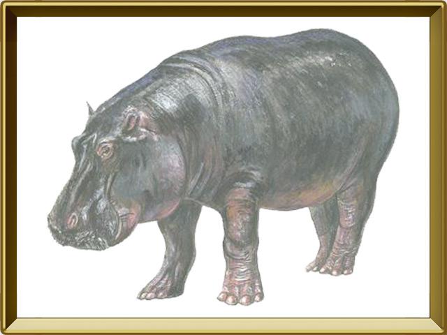 Бегемот — зверь, фото в рамке №1