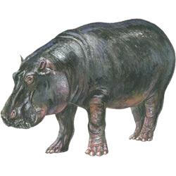 Бегемот — зверь, картинка цветная