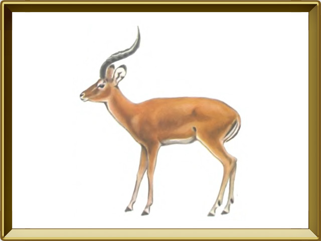 Газель — зверь, фото в рамке №1