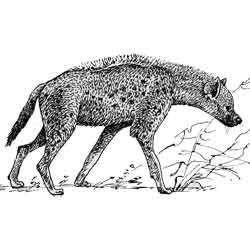 Гиена — зверь, картинка чёрно-белая