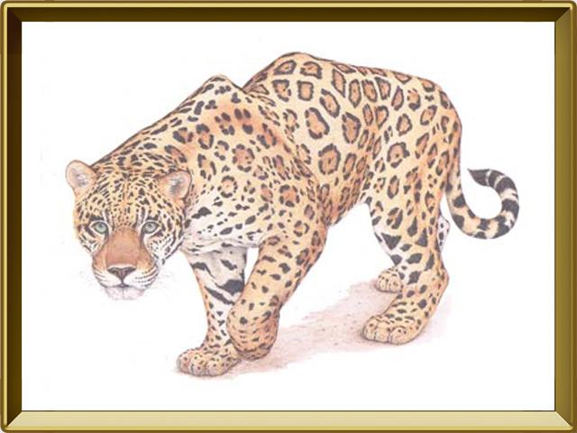 Ягуар — зверь, фото в рамке №1