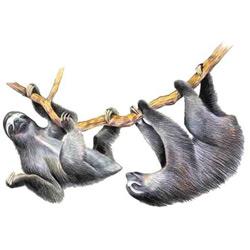 Ленивец — зверь, картинка цветная