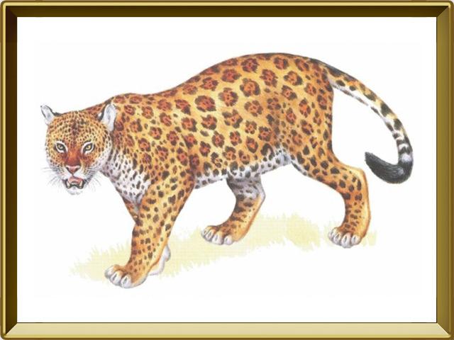 Леопард — зверь, фото в рамке №1