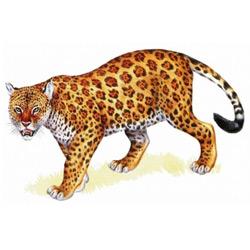 Леопард — зверь, картинка цветная
