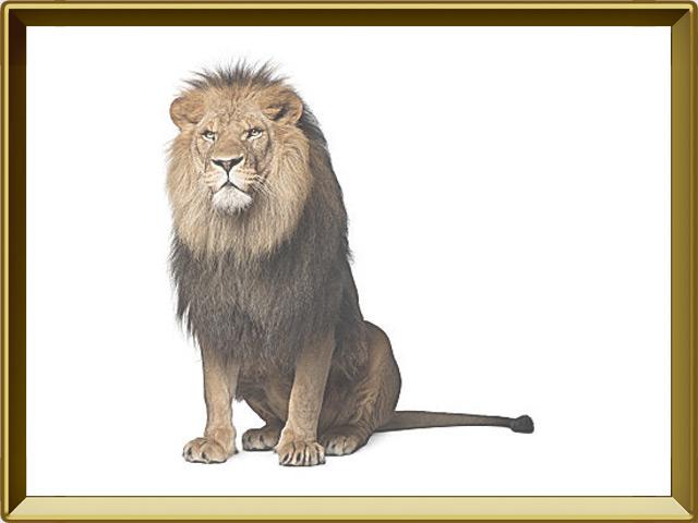 Лев — зверь, фото в рамке №1