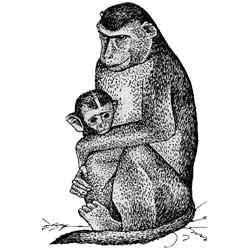 Макака — зверь, картинка чёрно-белая