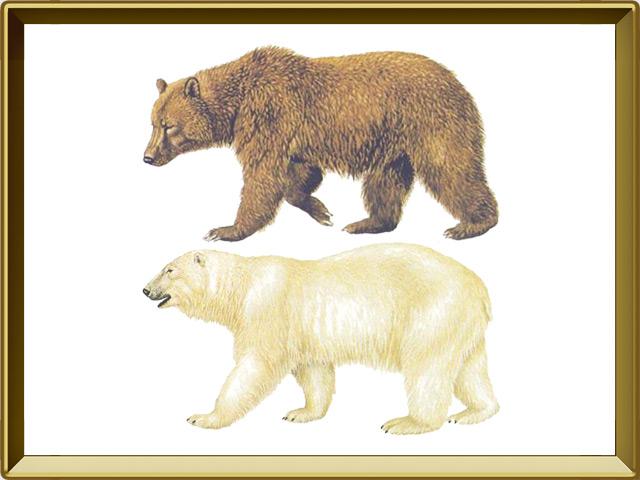 Медведь — зверь, фото в рамке №1