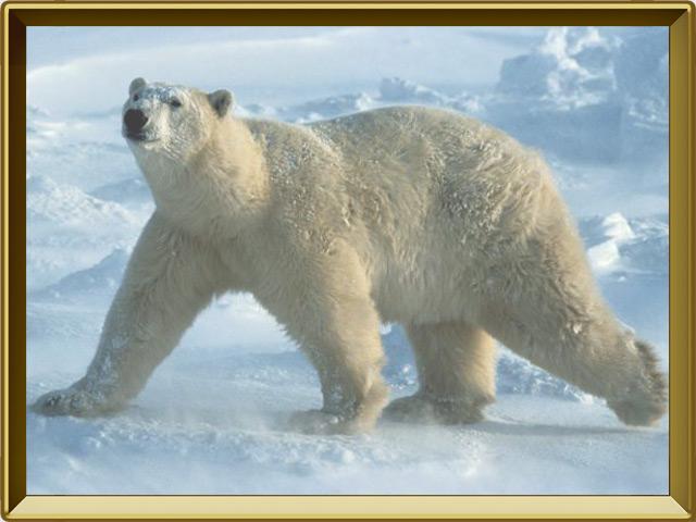 Медведь — зверь, фото в рамке №3