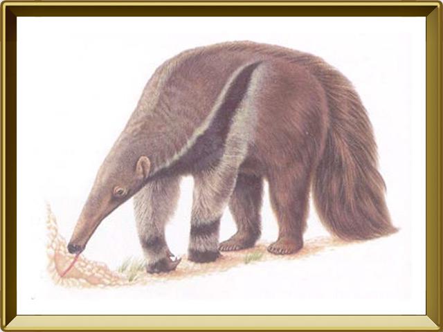 Муравьед — зверь, фото в рамке №1