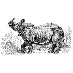 Носорог — зверь, картинка чёрно-белая