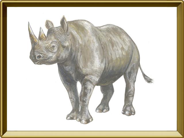 Носорог — зверь, фото в рамке №1
