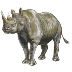 Носорог — зверь, картинка цветная