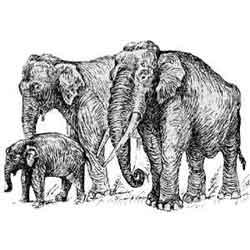 Слон — зверь, картинка чёрно-белая