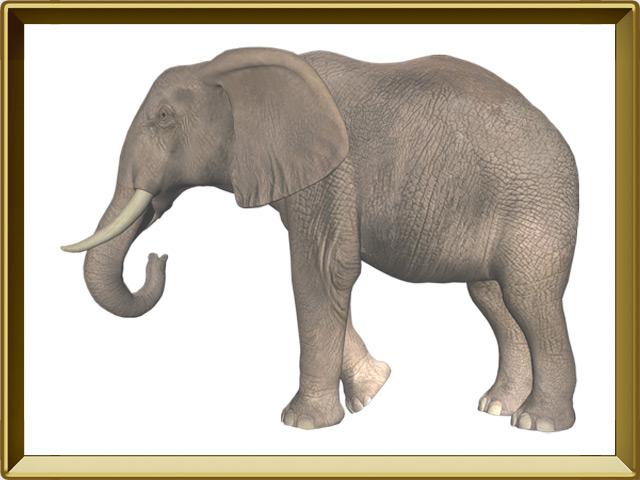 Слон — зверь, фото в рамке №1