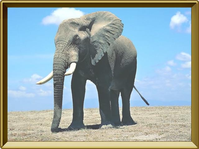 Слон — зверь, фото в рамке №2