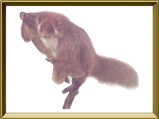 Тагуан — зверь, фото в рамке №1