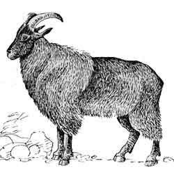 Тар — зверь, картинка чёрно-белая