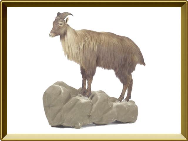 Тар — зверь, фото в рамке №1
