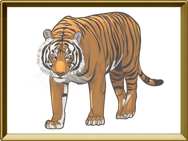 Тигр — зверь, фото в рамке №1