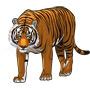 Тигр — зверь