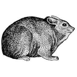 Жиряк — зверь, картинка чёрно-белая