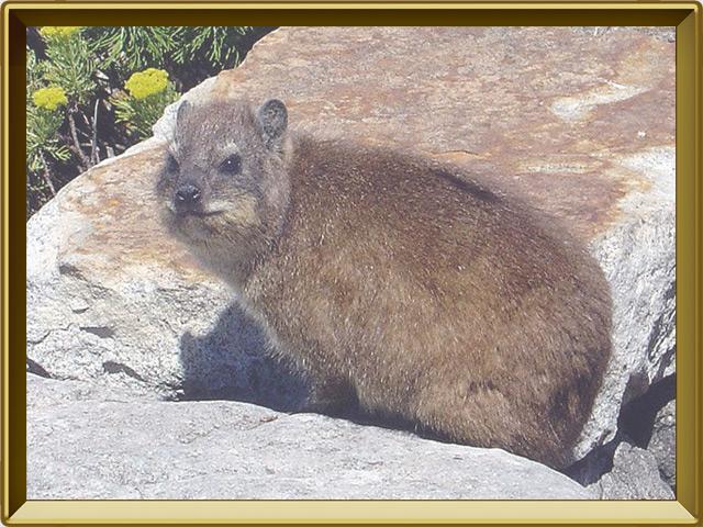 Жиряк — зверь, фото в рамке №2
